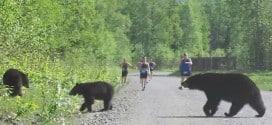 Insolite : Quand 3 ours s'invitent sur une course