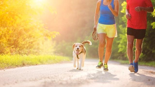 canicross-conseils-pour-courir-avec-son-chien - 2