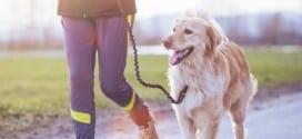 Canicross : Quelques conseils pour courir avec son chien