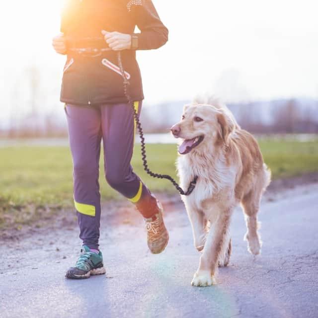 Canicross quelques conseils pour courir avec son chien globe runners - Cuisiner pour son chien ...
